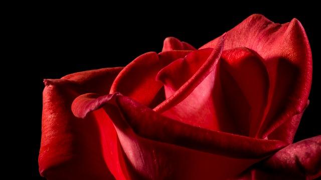 美女と薔薇